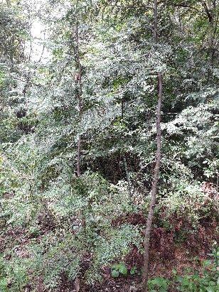 3fish 축령산 편백나무 묘목(10년생)