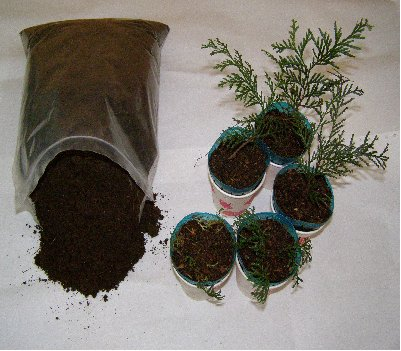 3fish 축령산 편백나무 씨앗기르기 부자재 고운 부식토