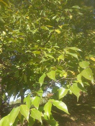 3fish  푸조나무