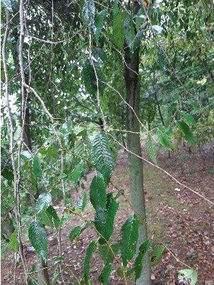 3fish  황벽나무