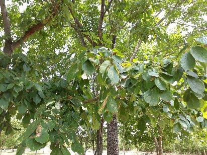 3fish 물푸레나무