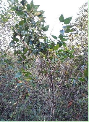 3fish 사방오리나무