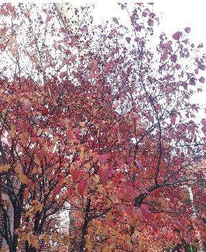 3fish 49) 미국 산딸나무