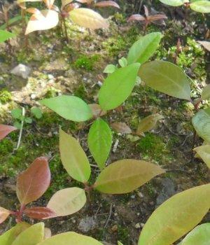 3fish  후박나무