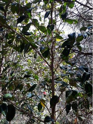 3fish  동백나무